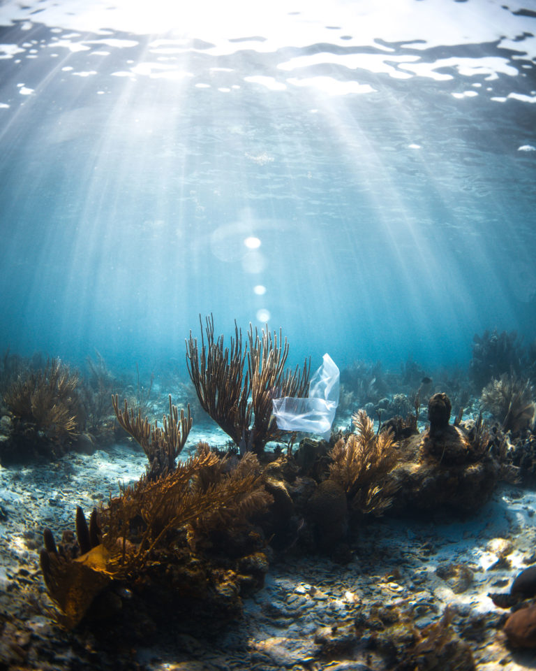 50 Minutes to Save the World - Save the Reef