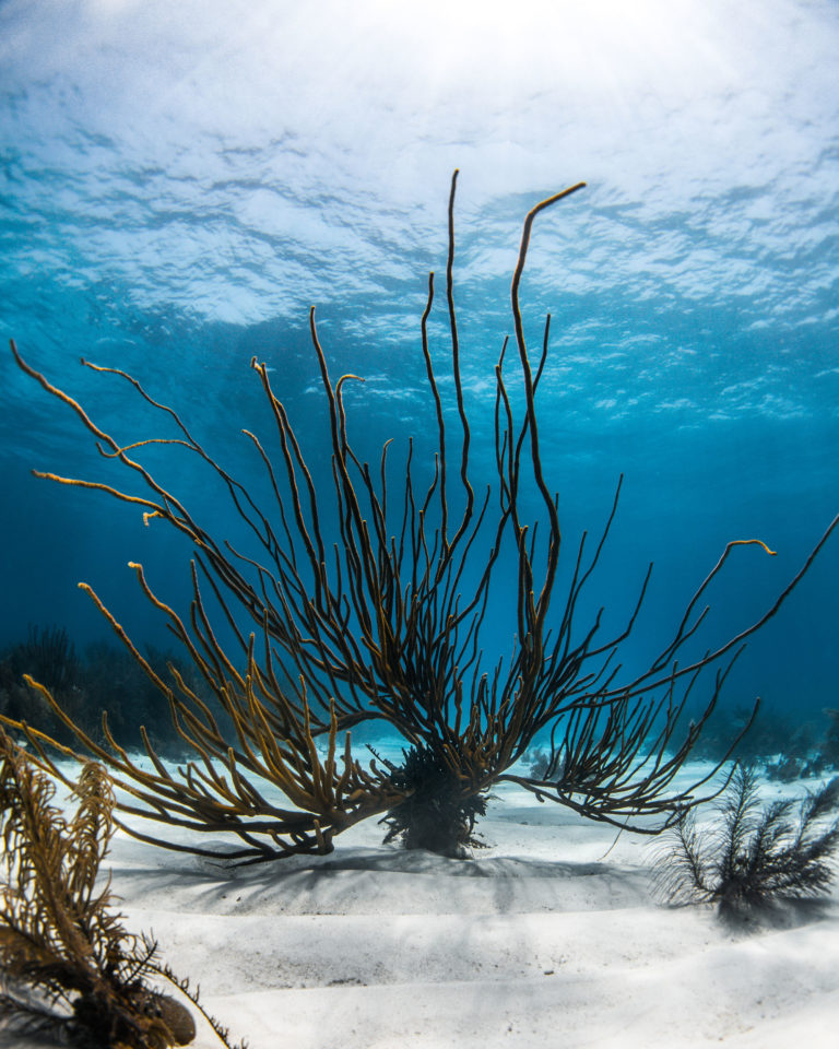 Reef - Save the Reef