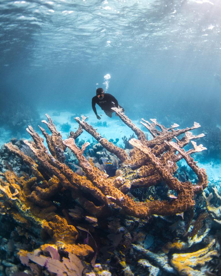 Amir Zakeri - Save the Reef